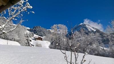 Der erste Schnee  November 2017