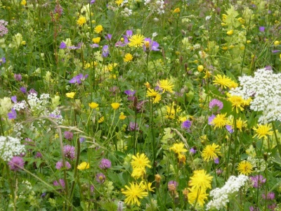 Blumen-und Kräutervielfalt